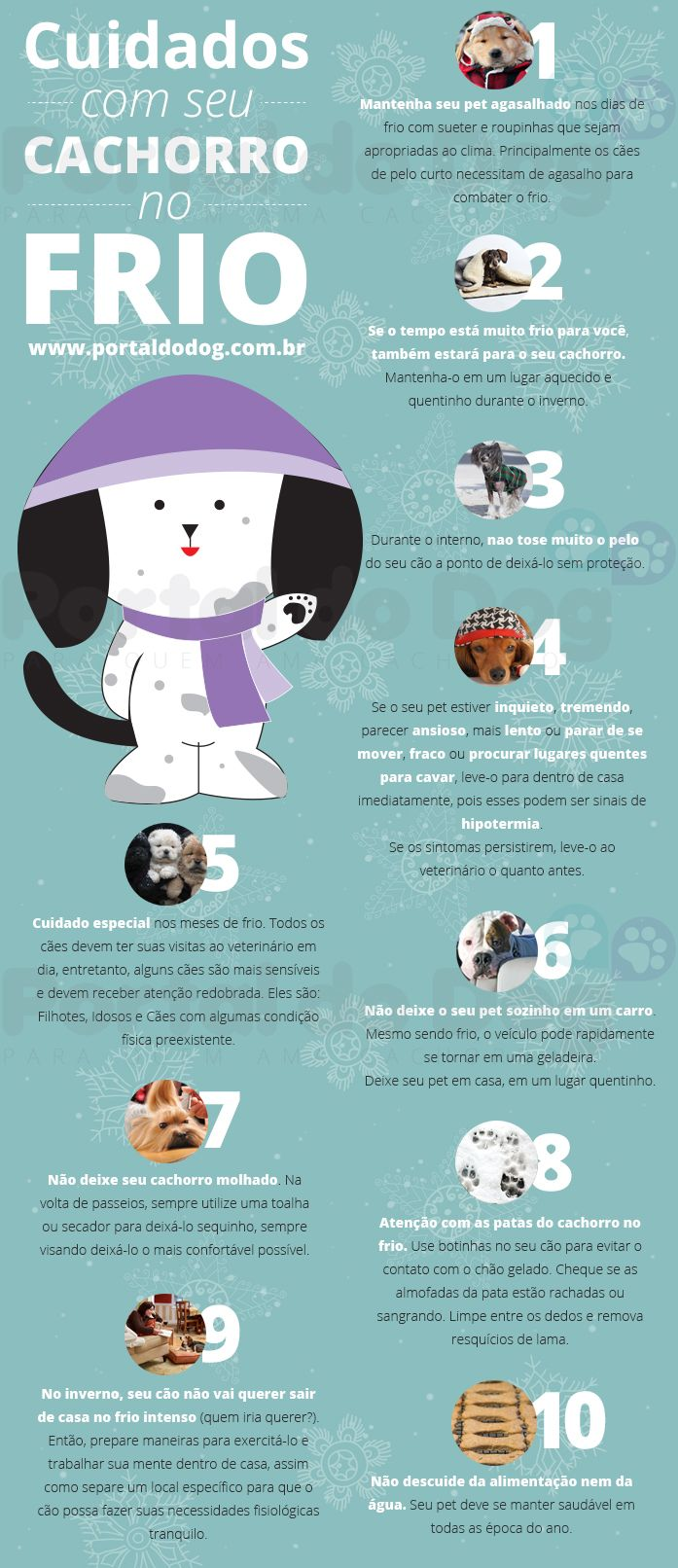 Dicas: Cuidados com o seu Pet no frio! <3