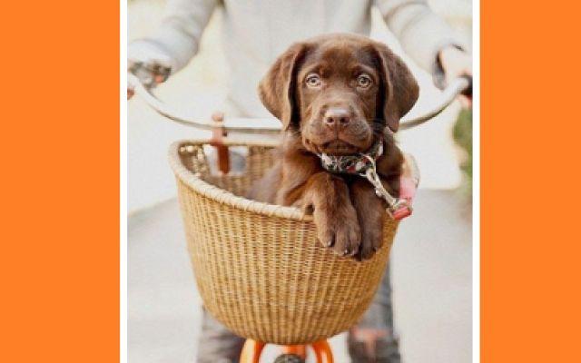 Un cane sul cestino della bici vede qualcosa... di sospetto! #bici #cestino #cane #abbaiare #semaforo