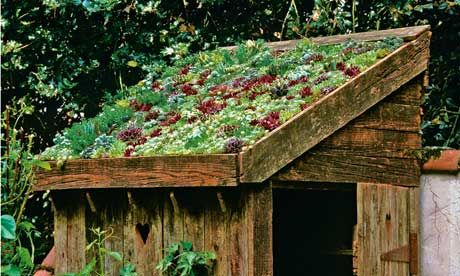 Drought tolerant, living sedum roof on small wooden shed. Photograph: Nicola Stocken Tomkins
