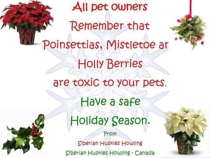 17 best images about plants  u0026 foods that are toxic to pets on pinterest