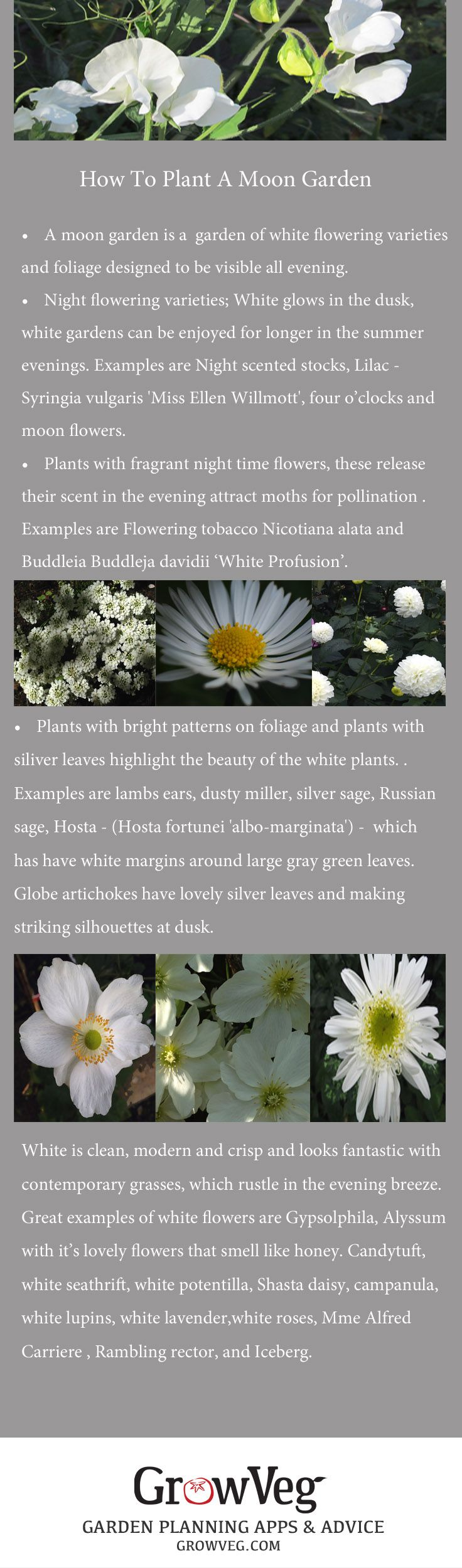 Moon or Twilight Garden How To, With beautiful, glowing white flowering plants. What a great idea.