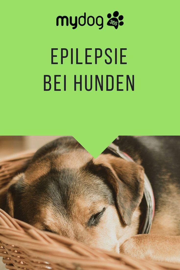 Epilepsie Bei Hunden Bleib Ruhig Hunde Tierarzt Hundegesundheit
