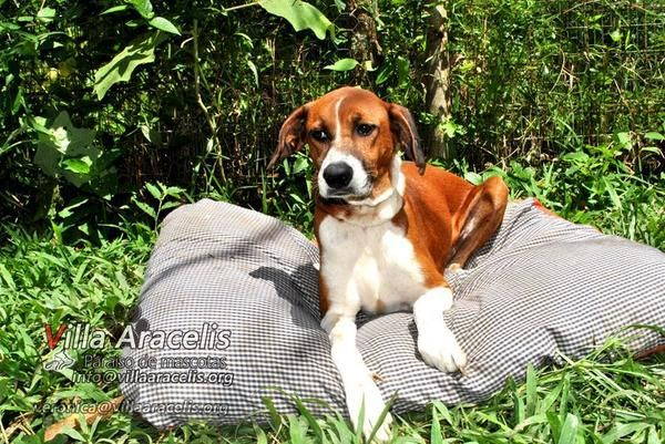 Hospedaje para canes en Caracas Via  http://viajarfull.com/hoteles-para-perros-en-caracas/