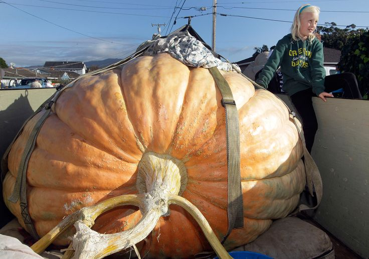 Oregon farmer wins Half Moon Bay Pumpkin Fest contest.  Weighing in at 1,775 lbs!