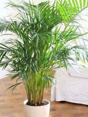 ingenious tropical foliage house plants. Fronds of Tropical Foliage Lightens Dark Corner 42 best plants images on Pinterest  Plant pots House and