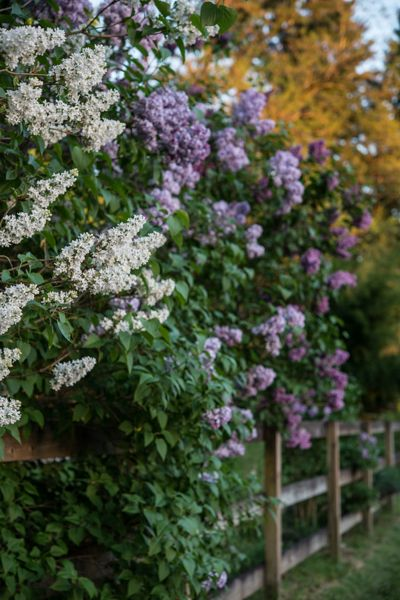 180 Best Images About Bloomin Trees And Bushes On Pinterest