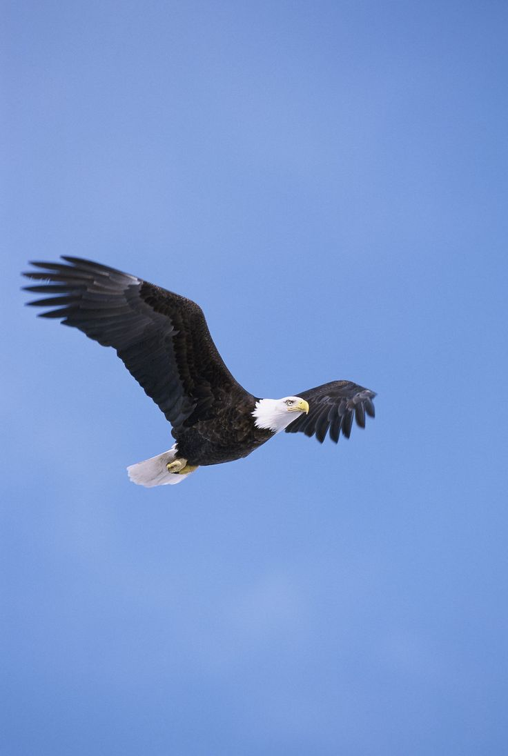 290 best birds images on pinterest different types of eagles