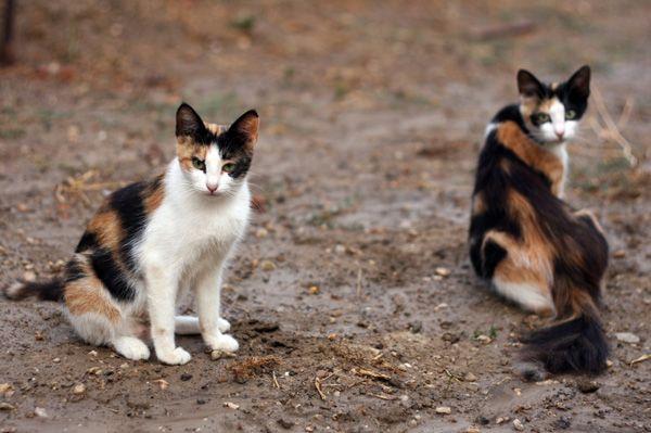 Maltrattamento gatti: nuova ordinanza del sindaco di Roseto a tutela delle colonie feline