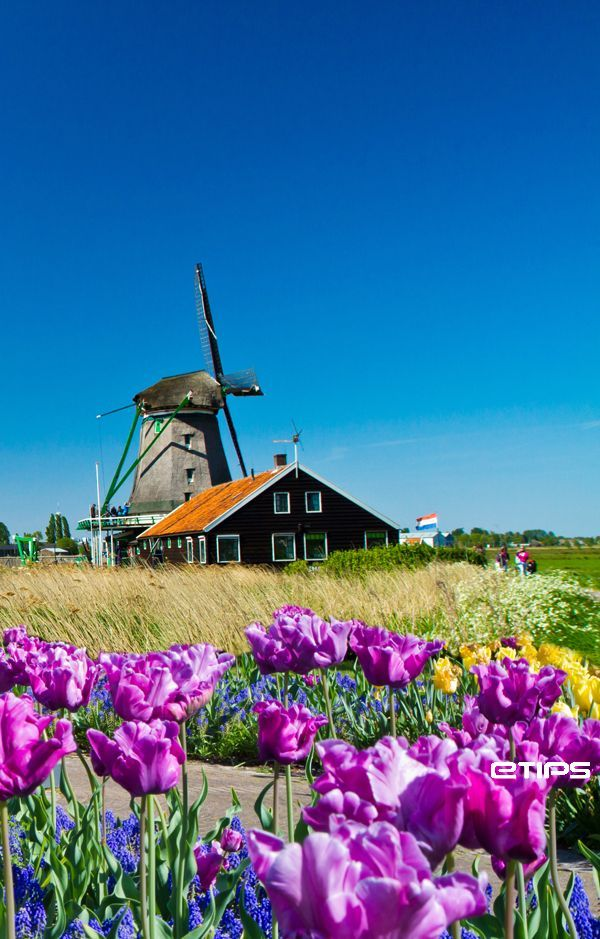 Windmills, Amsterdam | by eTips