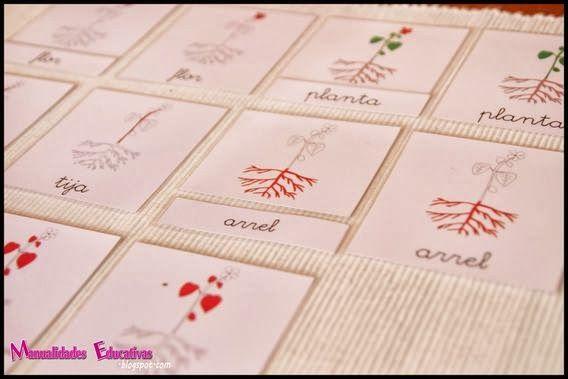 parts de les plantes amb cartes