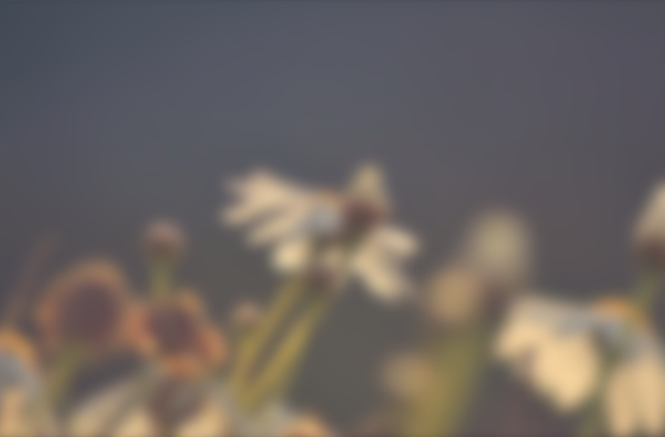 Beautiful Collection of Blurred Backgrounds - cssauthor.com