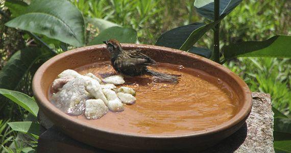 Bird Bathing in a Homemade Bird Bath