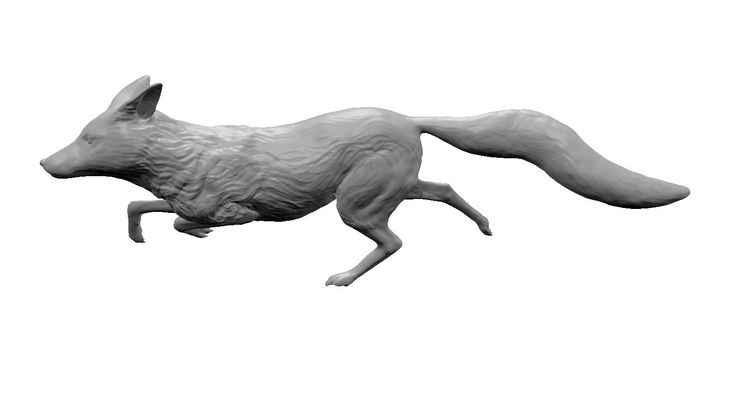 maya red fox running http://www.turbosquid.com/3d-models/maya-red-fox-running/895234