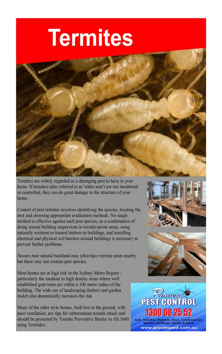 Termite Inspection Dapto and Termite information