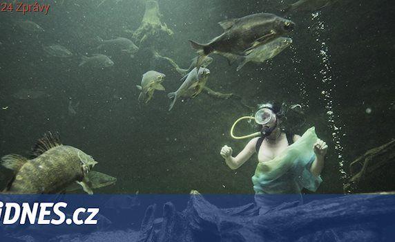 VIDEO: Vodní nymfa čistila nádrže v zoo, ponořila se mezi kapry a sumce