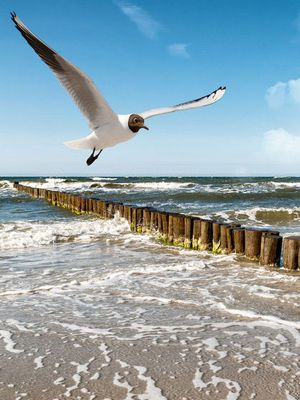 Sylt ist die größte Nordfriesische Insel #Sylt #Germany