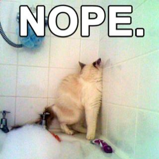 Nope: Cats, Animals, Nope, Bath, Funny Stuff, Humor, Funnies
