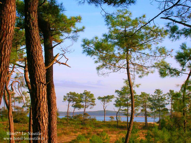 La forêt de Saint Trojan Les Bains. www.hotel-lenautile.fr