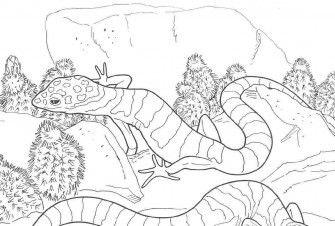 Free Leopard Gecko Coloring Pages High Quality Coloring