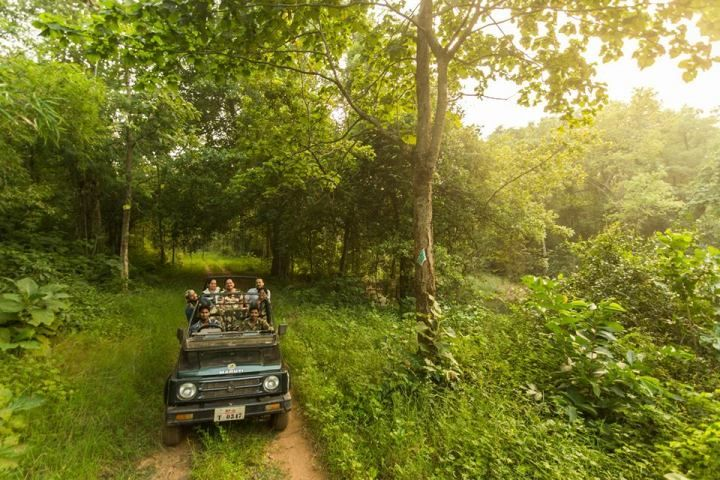 Wildlife Tour Operators in India Book-my-safari.com is the leading wildlife tour operators in India offering exclusive customized wildlife tour packages. Some of the top wildlife tour packages are programmed for wildlife sanctuaries such as in Pench Natiional Park.
