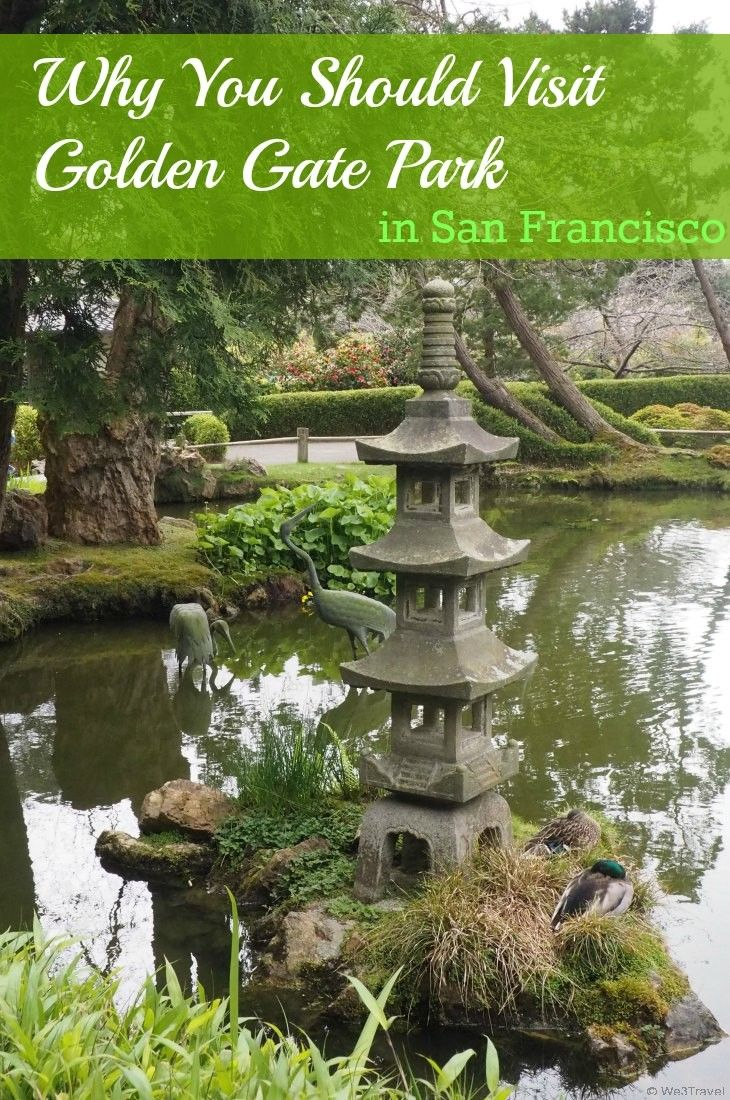 Why you should visit Golden Gate Park when you are in San Francisco, including a visit to the California Academy of Sciences, deYoung Museum, Conservatory of Flowers, Buffalo Paddock, and the Koret Children's Quarter.