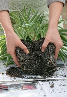 Installer un massif en sachant par avance que l'on n'aura pas à l'arroser beaucoup ni souvent, cela se prépare ! Nos sélection des plantes idéales et nos conseils de plantation.
