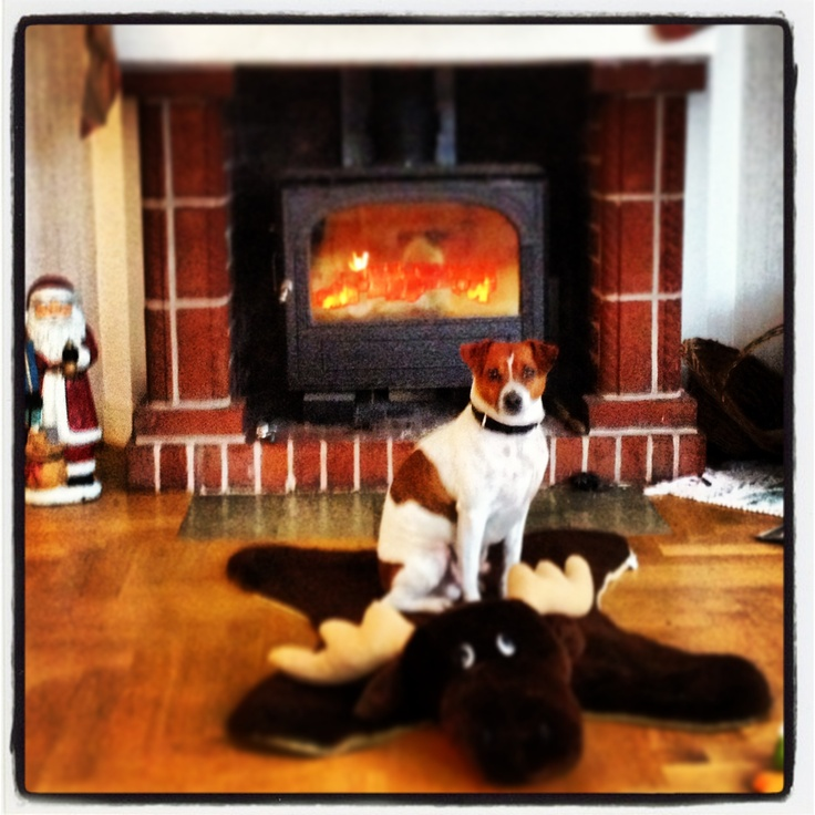 Dog on top of elk in front of fireplace