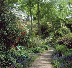Growing a luscious garden can be done in the shade. The key is selecting plants well-suited to levels of low-sunlight.