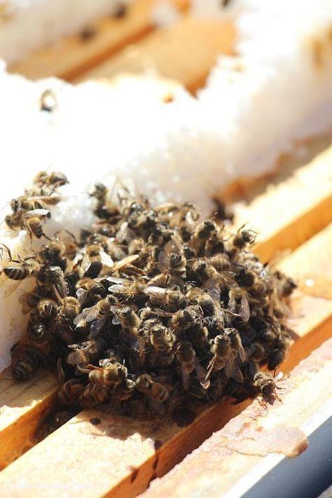 Dead Bees near sugar cake