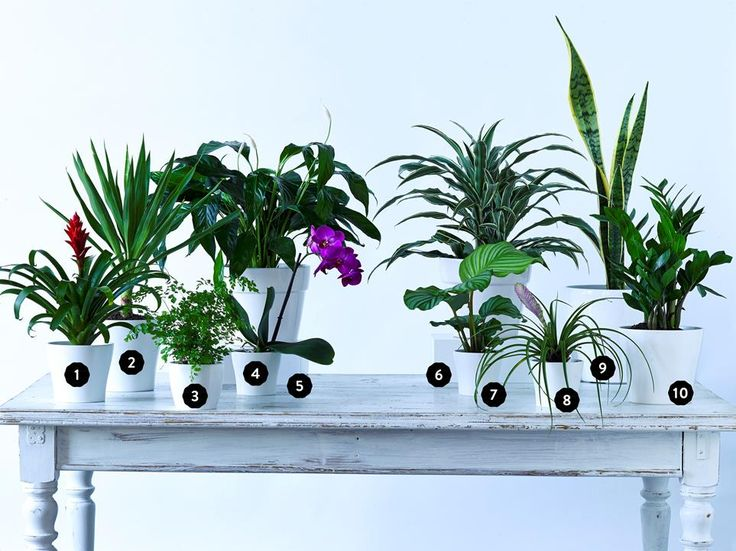 """Indoor plants you'll struggle to kill. All pictured plants are available at [Bunnings](http://www.bunnings.com.au//?utm_campaign=supplier/ target=""""_blank""""). Photo: Scott Hawkins/bauersyndication.com.au"""