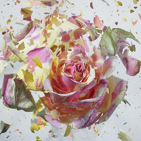 High Speed Flower Explosions by Martin Klimas | Colossal