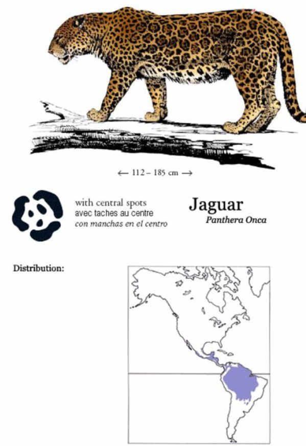 leopard and jaguar comparison - photo #17
