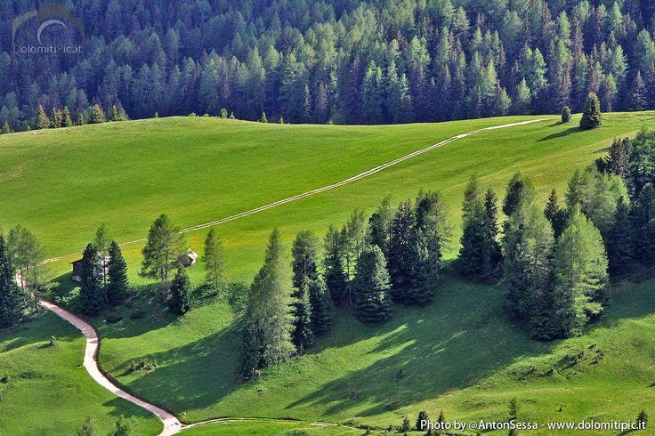 Amazing Green #Dolomites #ValdiFassa