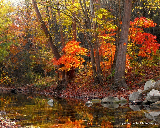 Autumn In The Ozarks #autumn #fall #landscape #photography #water  #reflections