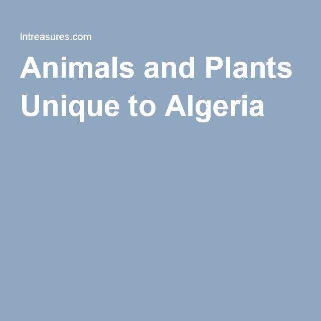 The 21 best images about CS  Algeria on Pinterest  Fun facts for