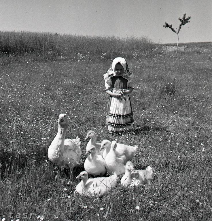 Among the most beautiful costumes in Slovakia is undoubtedly the one still worn by the inhabitants of Hrušov. Photo: archive TASR, author K. Cích / 13. June 1957