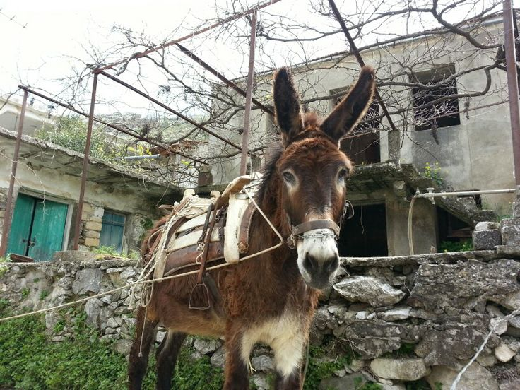 A donkey during the outreach on Crete april 2014 together with CAWS