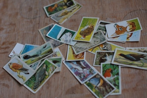 Brooke Bond Tea Cards. The tea came in a cardboard box and was loose tea, no tea bags then. I collected these like a maniac!
