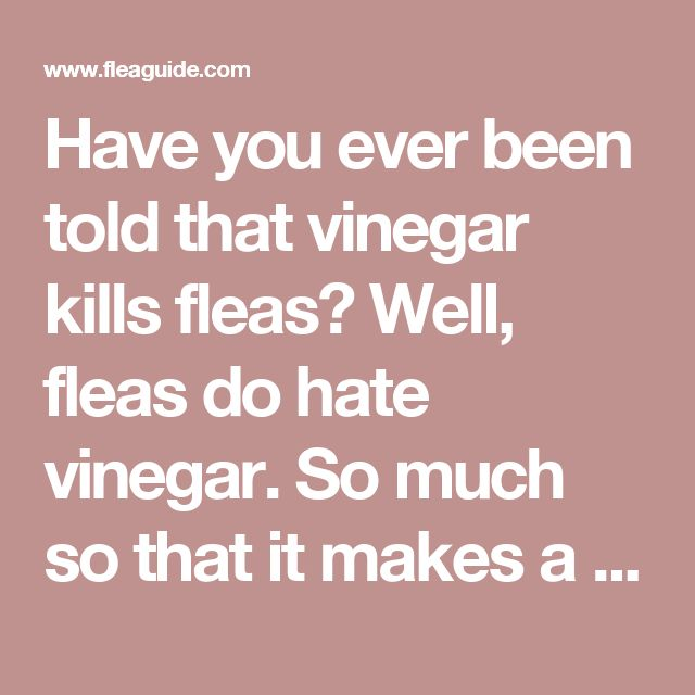Have you ever been told that vinegar kills fleas? Well, fleas do hate vinegar. So much so that it makes a handy homemade flea spray. A pet who has been soaked or doused in a vinegar mixture will not be nearly as tasty to fleas. Here is how to make it:  Simply find a clean spray bottle (one that has not been used with cleaning agents or anything similar) and fill it with 1/2 water and 1/2 apple cider vinegar. We like the apple cider vinegar because cats and dogs tend to lick themselves after…