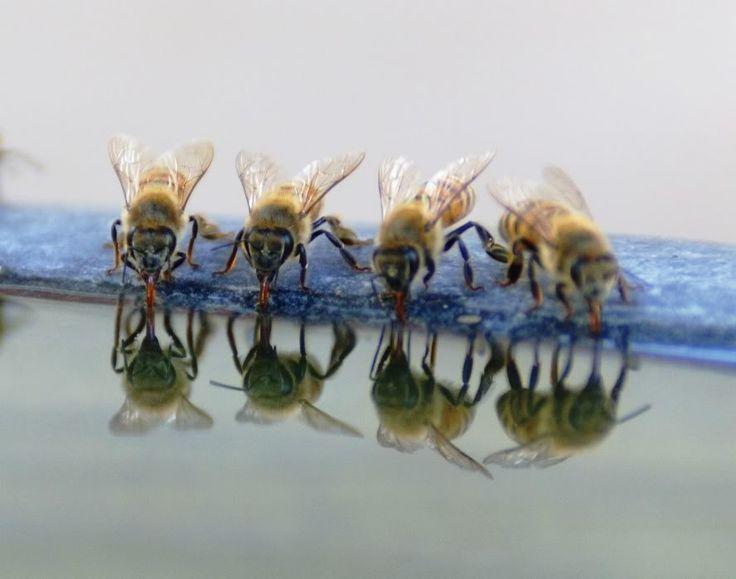 Bees drinking water from a bird bath This photo was uploaded by leoinvegas