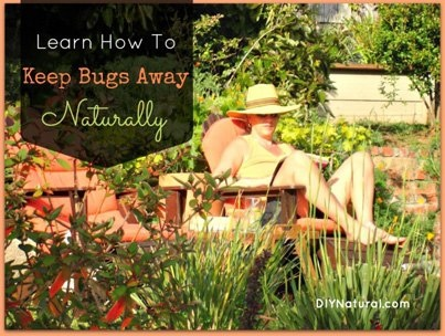 Keep bugs away naturally .....   http://www.diynatural.com/homemade-insect-repellent-ideas/