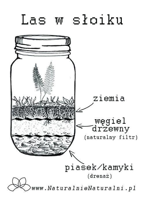 Las Ogród W Słoiku Diy Jak Zrobic Warsztaty Sklep Online