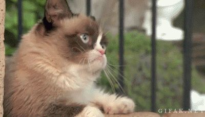 Grumpy Cat and Grumpy! #GrumpyCat - I think this was taken at Disneyland, Nov 2013?