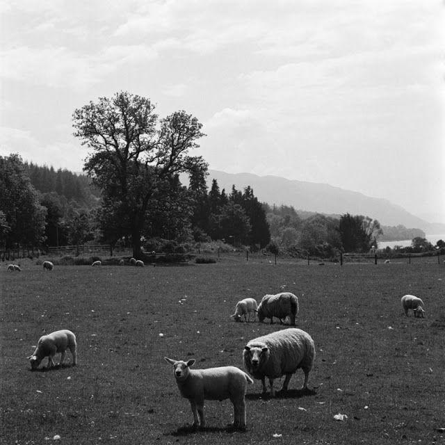 Barba ao Vento: Terras Altas da Escócia