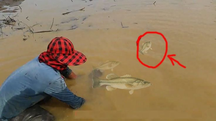 Amazing Catch n Cook fish in a lake { TROUT FISHING videos in cambodia }...