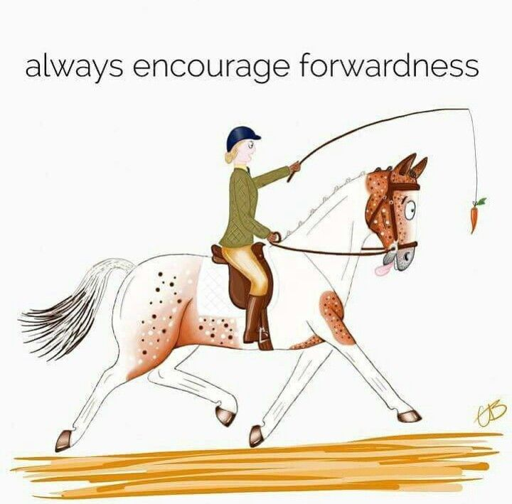 Equestrian quotes                                                                                                                                                                                 More