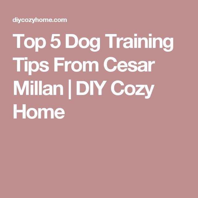 Top 5 Dog Training Tips From Cesar Millan | DIY Cozy Home