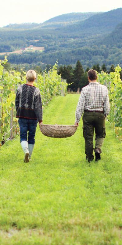 Hva med å sove i en tønne? Her våkner man opp til fuglekvitter og smakfull frokost i Telemarks frodige omgivelser på en ekte vingård! vinsmaking med tapas gjør dette til en berusende vinopplevelse.