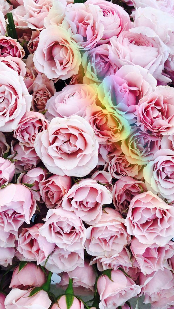 Cute Roses Wallpapers For Laptop Sch 246 Ne Pinterest Enchantedinpink Enchantedinpink