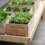 horta em caixas de garrafas: Boxes Gardens, Diy'S, Wine Crates, Gardens Idea, Outdoor, Vegetables Gardens, Herbs Gardens, Small Spaces, Wine Boxes
